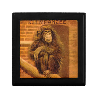 チンパンジーのヴィンテージの幻灯のスライドの1890年代 ギフトボックス