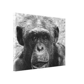 チンパンジーの顔、白黒素晴らしいキャラクター キャンバスプリント