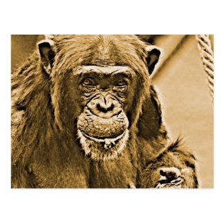 チンパンジー216 ポストカード