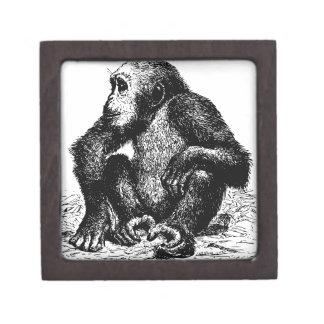 チンパンジー ギフトボックス