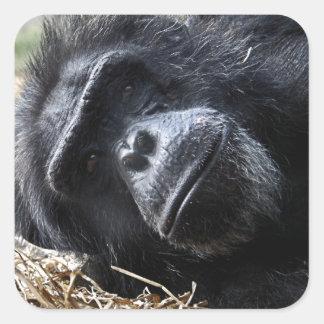 チンパンジー スクエアシール