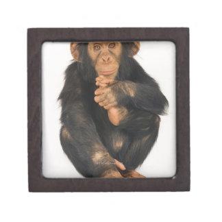 チンパンジー(鍋のtroglodytes)。 若いplayfull ギフトボックス
