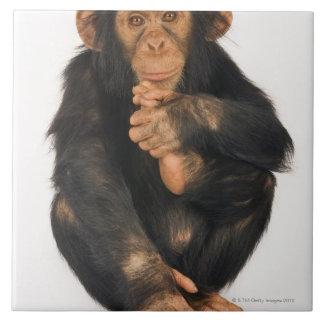 チンパンジー(鍋のtroglodytes)。 若いplayfull タイル