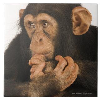 チンパンジー(鍋のtroglodytes)。 若いplayfull 2 タイル