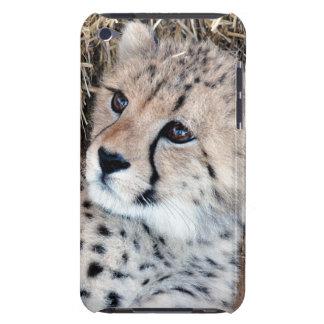 チータのカブスのかわいい写真 Case-Mate iPod TOUCH ケース