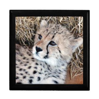 チータのカブスの愛らしい写真 ギフトボックス