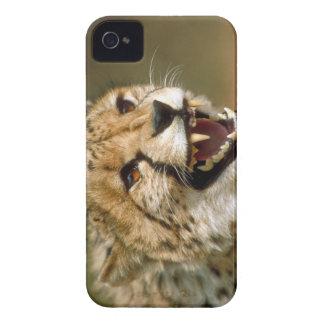 チーター1 Case-Mate iPhone 4 ケース