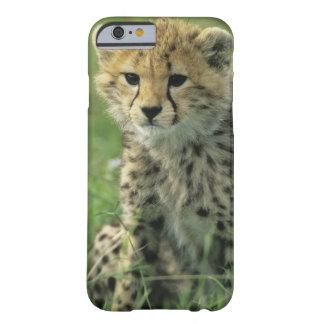 チータ、(Acinonyxのjubatus)、タンザニア、Serengeti Barely There iPhone 6 ケース