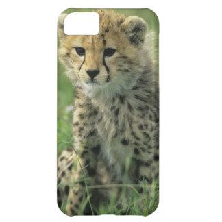 チータ、(Acinonyxのjubatus)、タンザニア、Serengeti iPhone5Cケース