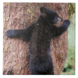 ツキノワグマ、木americanus、Ursus Anan 2の幼いこども タイル