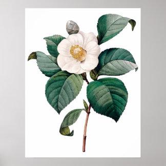 ツバキの植物の優れた質のプリント ポスター