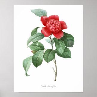 ツバキの良質の植物のプリント ポスター