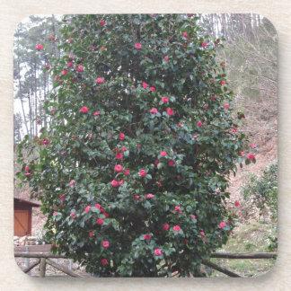 ツバキのjaponicaの古代日本の栽培品種 コースター