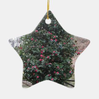 ツバキのjaponicaの古代日本の栽培品種 セラミックオーナメント
