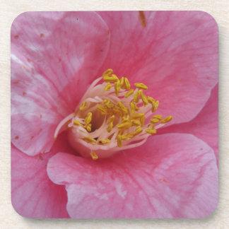 ツバキのjaponicaの花の古代栽培品種 コースター