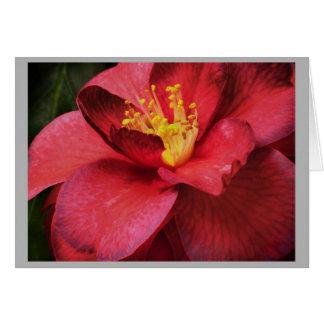 ツバキ16の深紅のツバキの花 カード