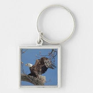 ツリーブランチの白頭鷲 キーホルダー