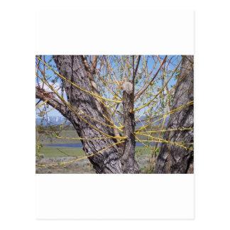 ツリーブランチの芽 ポストカード