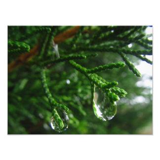 ツリーブランチの雨滴 フォトプリント