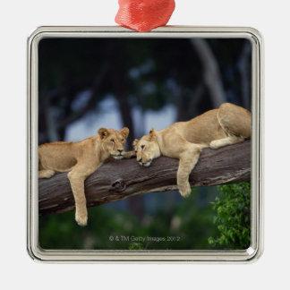 ツリーブランチ、ケニヤ、アフリカにあっているライオンの子 メタルオーナメント
