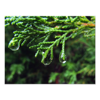 ツリーブランチ(#2)の雨滴 写真プリント