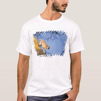 ツリーブランチ、Serengetiのベルベットモンキー Tシャツ
