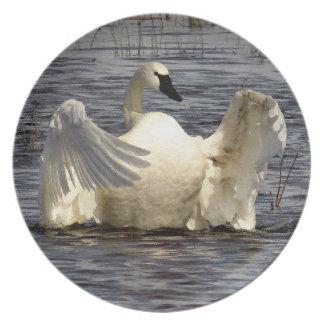 ツンドラ白鳥の鳥の野性生物動物 プレート
