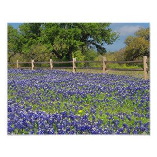 テキサス州の写真のプリントの美しいBluebonnets フォトプリント