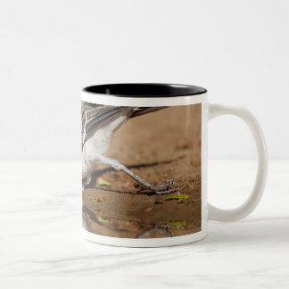 テキサス州の南ponで飲んでいる北のマネシツグミ ツートーンマグカップ