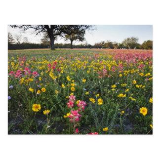 テキサス州の路傍の野生の花、春3 ポストカード