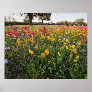 テキサス州の路傍の野生の花、春 ポスター