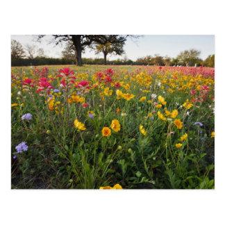 テキサス州の路傍の野生の花、春 ポストカード