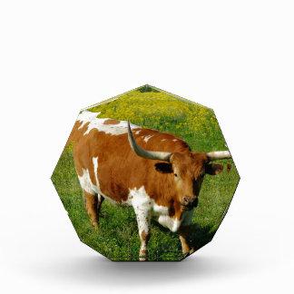 テキサス州の長角牛 表彰盾
