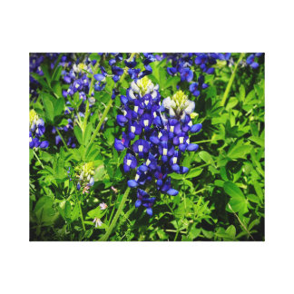 テキサス州Bluebonnetsのハートの野生の花 キャンバスプリント