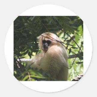 テナガザル猿 ラウンドシール