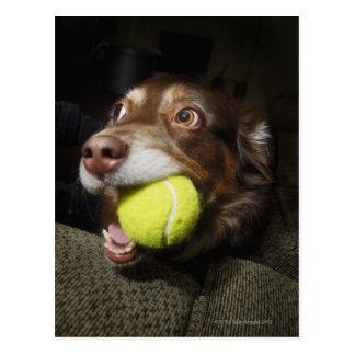テニス・ボールを持つ犬 はがき