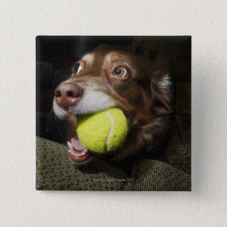 テニス・ボールを持つ犬 缶バッジ
