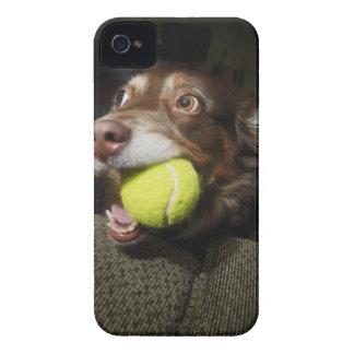 テニス・ボールを持つ犬 Case-Mate iPhone 4 ケース