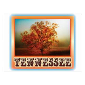 テネシー州の秋の木場面 ポストカード