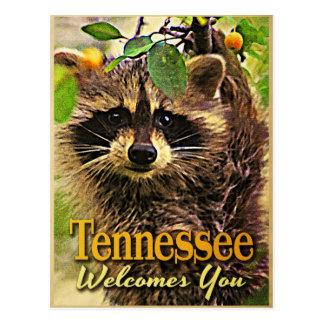 テネシー州はアライグマ歓迎します ポストカード