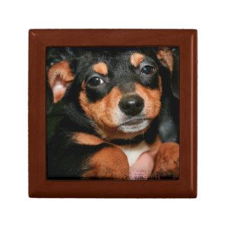 テリアの子犬のギフト用の箱 ギフトボックス