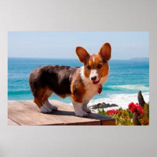 テーブルに立っているペンブロークのウェルシュコーギーの子犬 ポスター