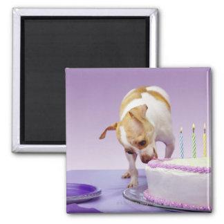 (テーブルのチワワの)食べ物のお誕生日ケーキの後をつけて下さい マグネット