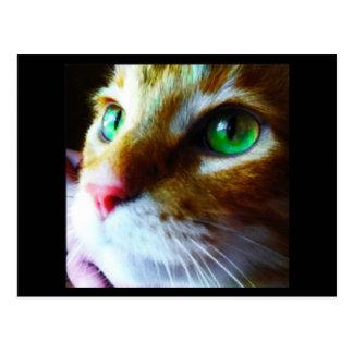 """""""ディスコこんにちは""""はかわいい猫の郵便はがきを言います ポストカード"""