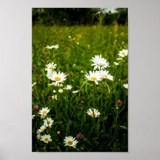 デイジーおよび野生の花の分野 ポスター