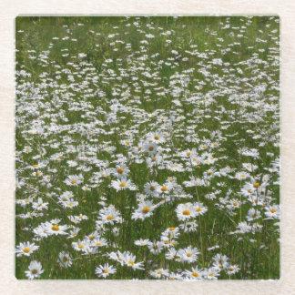 デイジーの自然の写真の分野 ガラスコースター