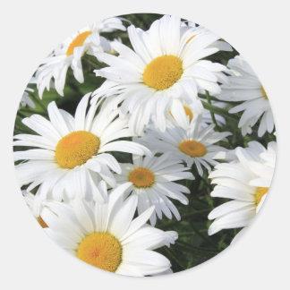 デイジーの花の成長する白 ラウンドシール