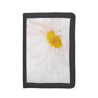 デイジーの花の白く黄色いデイジーの花の花柄
