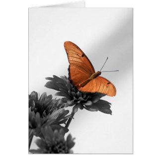 デイジーの(昆虫)オオカバマダラ、モナーク カード