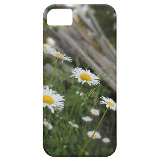 デイジーのiPhoneの場合 iPhone SE/5/5s ケース